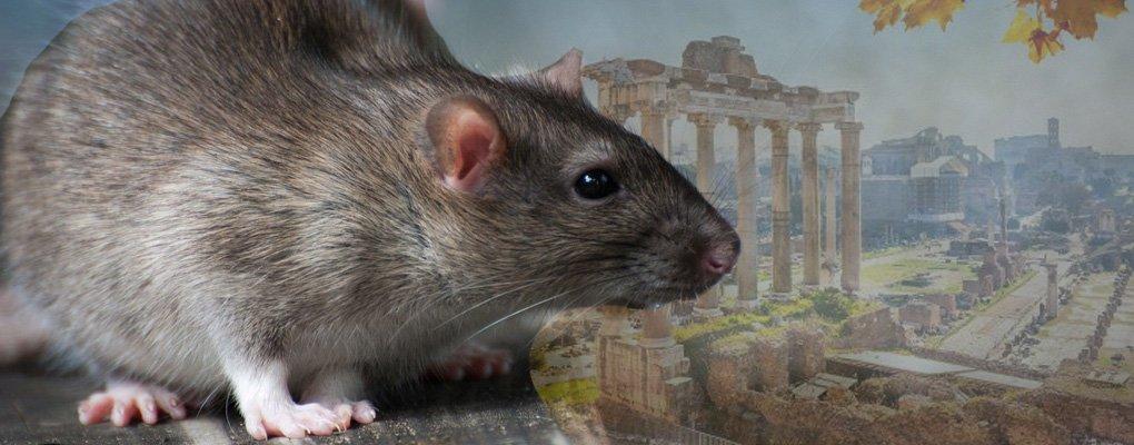 Derattizzazione Ratti Roma