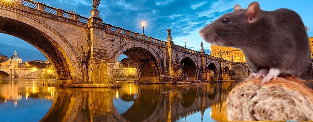 Disinfestazione Ratti Roma